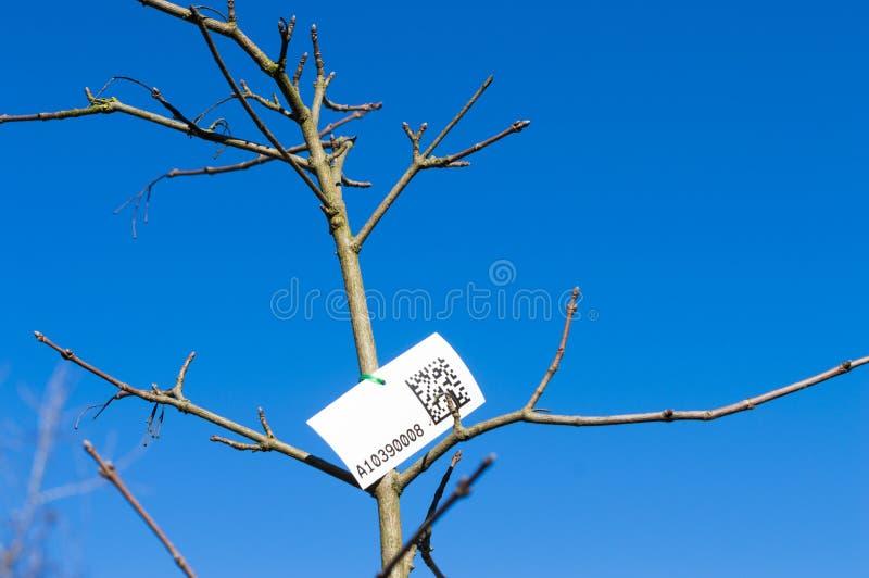 Censimento degli alberi fotografie stock libere da diritti
