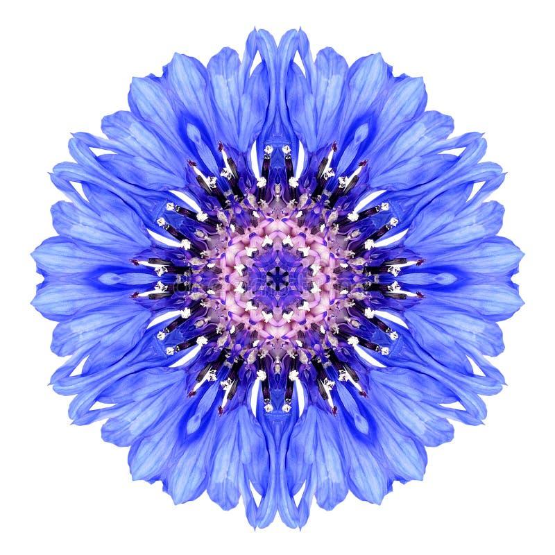 Centáurea azul Mandala Flower Kaleidoscope Isolated no branco fotos de stock royalty free
