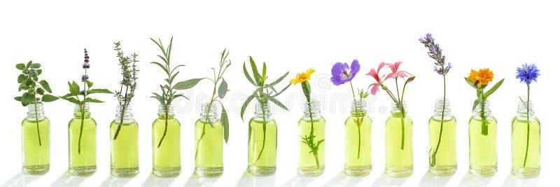 Centáurea panorâmico das flores do óleo essencial, eucalipto, estragão, gerânio, gerânio, alfazema, hortelã, peru do cravo, oréga imagem de stock royalty free