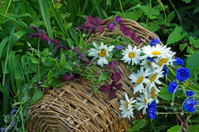 Download Centáureas Azuis E Margaridas Brancas Foto de Stock - Imagem de daisies, jardim: 65576636