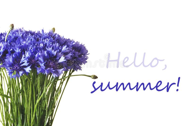Centáureas azuis isoladas no fundo branco Olá! rotulação do verão fotos de stock
