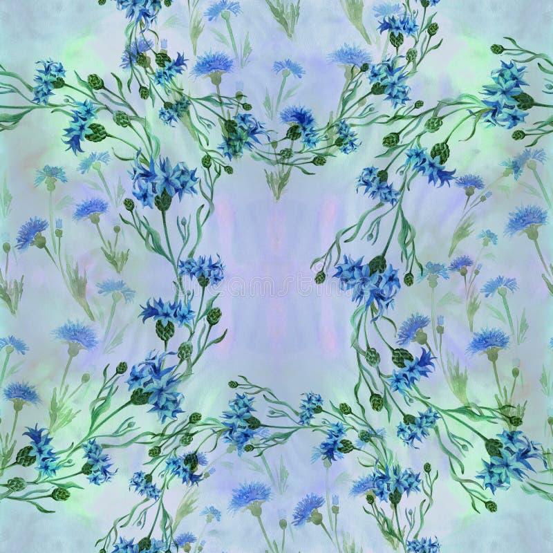 Centáureas - flores Aquarela que pinta plantas medicinais, da perfumaria e do cosmético wallpaper Use materiais impressos, sinais ilustração stock