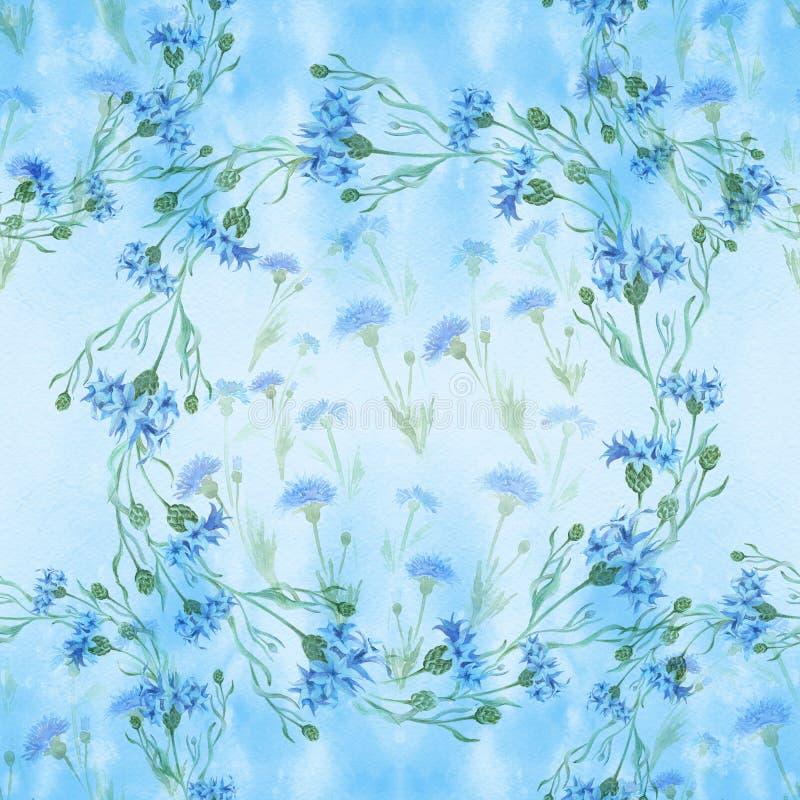 Centáureas - flores Aquarela que pinta plantas medicinais, da perfumaria e do cosmético wallpaper Use materiais impressos, sinais ilustração do vetor