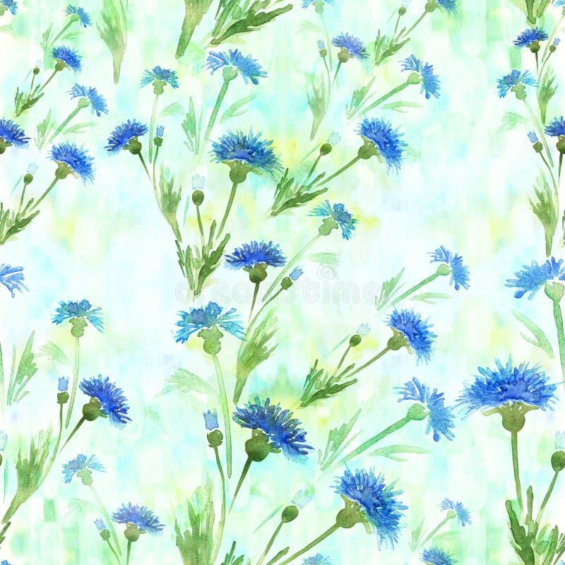 Centáureas - flores Aquarela que pinta plantas medicinais, da perfumaria e do cosmético wallpaper Use materiais impressos, sinais ilustração royalty free