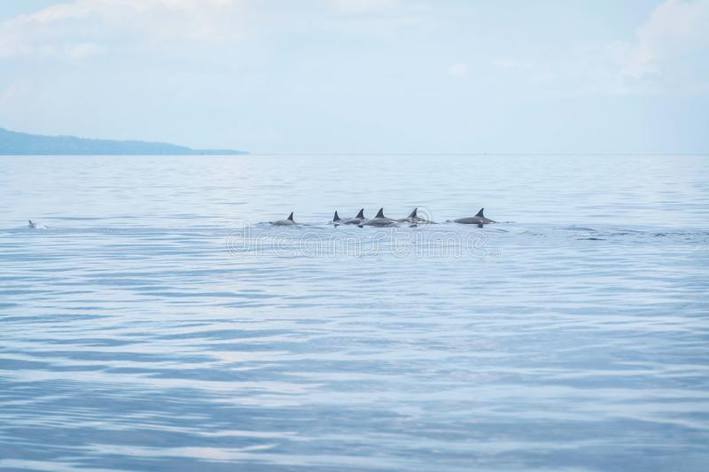 Cent dauphins Negros Oriental, Philippines photographie stock libre de droits