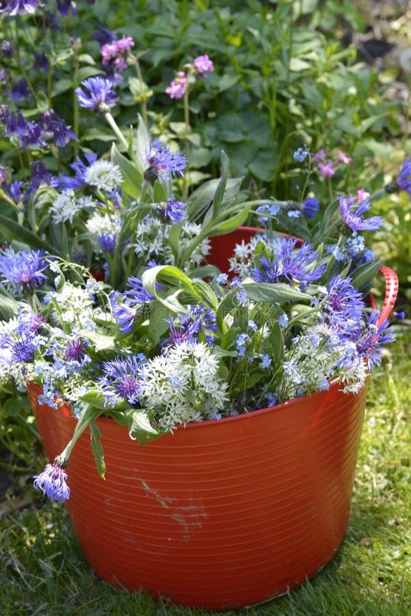 Centaurea azul y ajo salvaje fotos de archivo libres de regalías