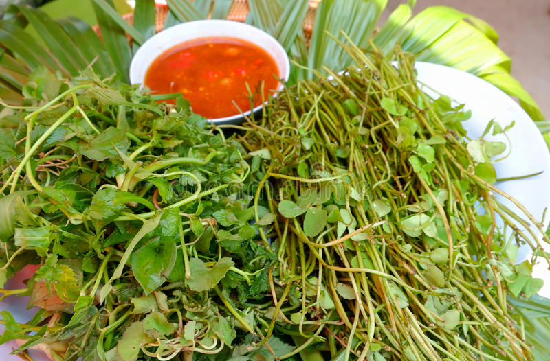 Centella asiatica And vegetables. Centella asiatica vegetables and Spicy sauce stock photo