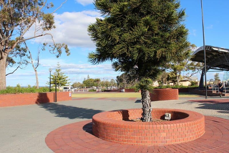 Centennial Parkowa Bunbury Zachodnia Australia obraz stock