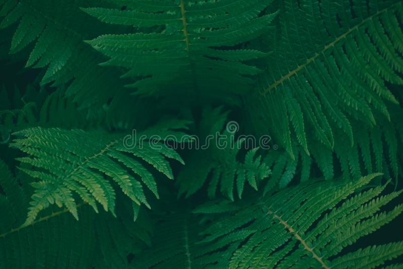 Center of dark green fern tree in native bush, natural background texture stock photos