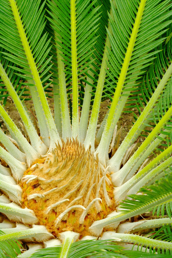 Download Center of a palmtree stock image. Image of vertical, nobody - 15078977