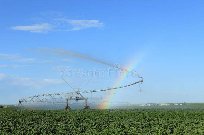 A center pivot agricultural sprinkler irrigating a field of potatoes. A center pivot agricultural sprinkler with a folding arm to water the corners of a field royalty free stock photo