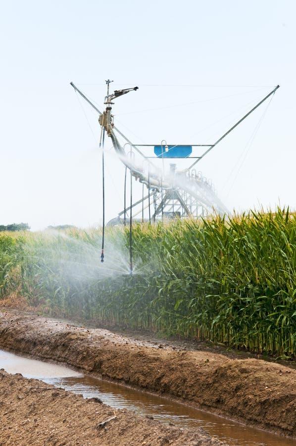 Free Center Pivot Irrigation Of A Cornfield Royalty Free Stock Image - 20837416