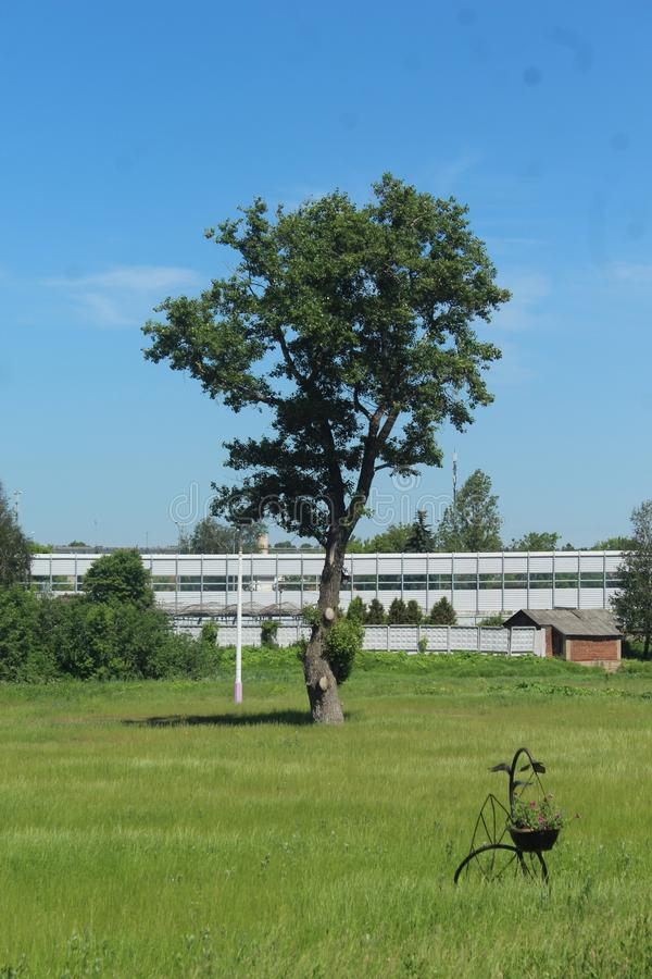 Moscow Oblast. Pushkino County. Tarasovka. Tree. This the center of Tarasovka - western part. Welcome to Moscow Oblast royalty free stock photography