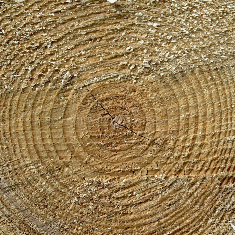 Centered wood texture. Centered light wood texture background, close-up royalty free stock image