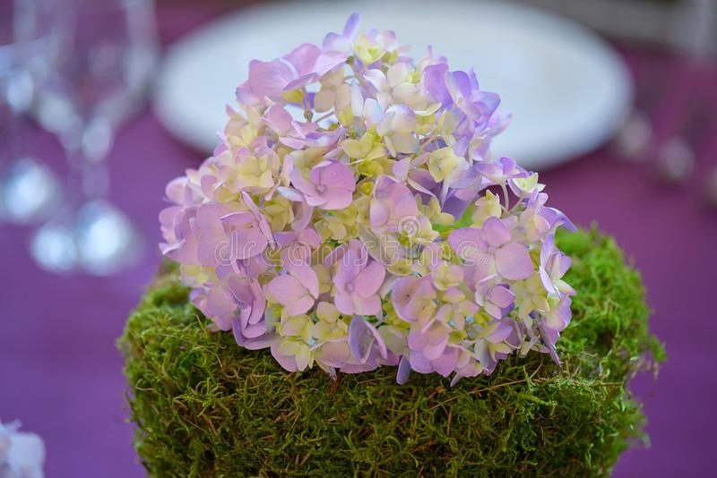 Centerpiece featuring a cluster of purple hydrangeas resting on a thick green moss mount stock photos