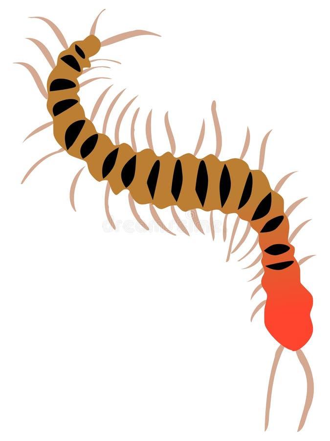 Centipède illustration de vecteur