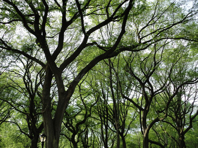 Centraal park royalty-vrije stock afbeelding