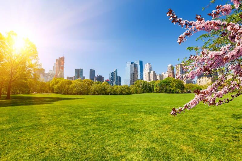 Centraal park bij de lente, New York stock foto's