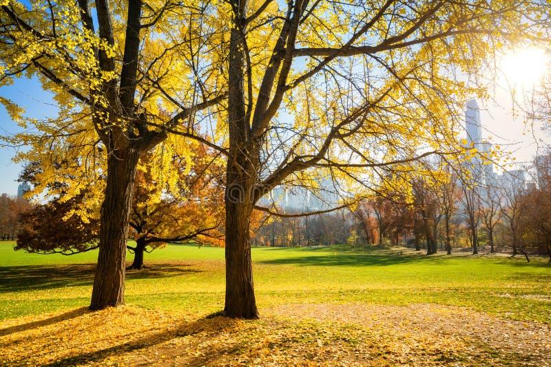 Centraal park bij zonnige de herfstdag royalty-vrije stock afbeeldingen