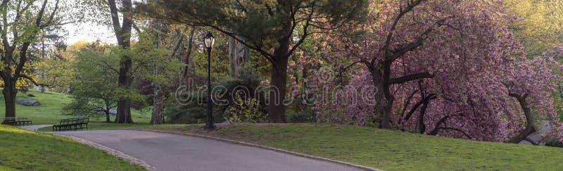 Centraal park in het voorjaar royalty-vrije stock foto