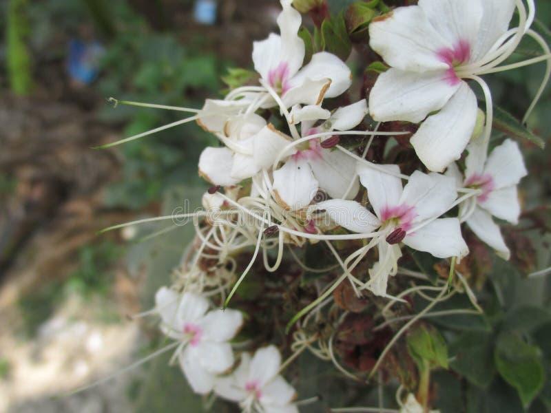 Centrado en las flores blancas foto de archivo libre de regalías