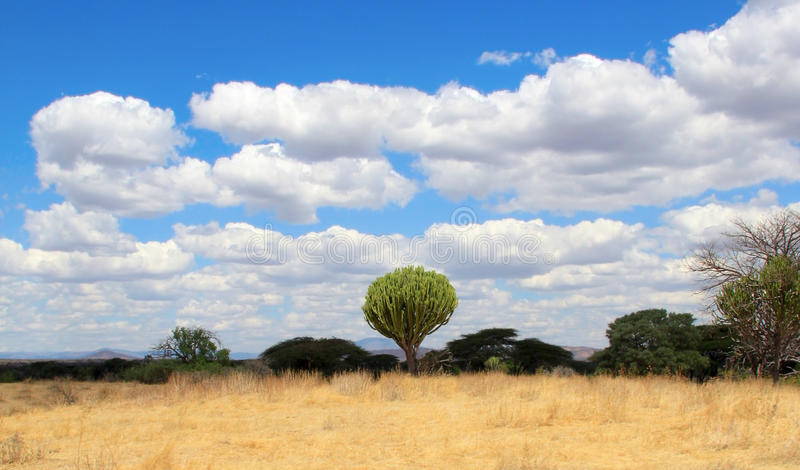 Central african bushy landscape with cactus royalty free stock photos