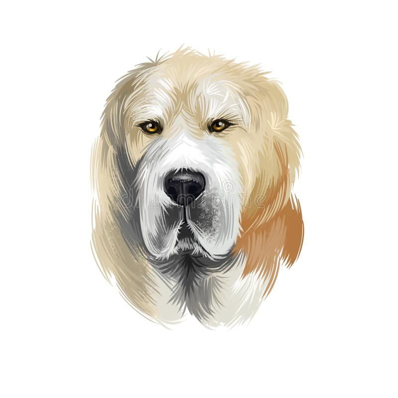 Central Asian Shepherd Dog breed isolated on white background digital art illustration. Cute pet hand drawn portrait. Graphic. Clipart design realistic animal royalty free illustration