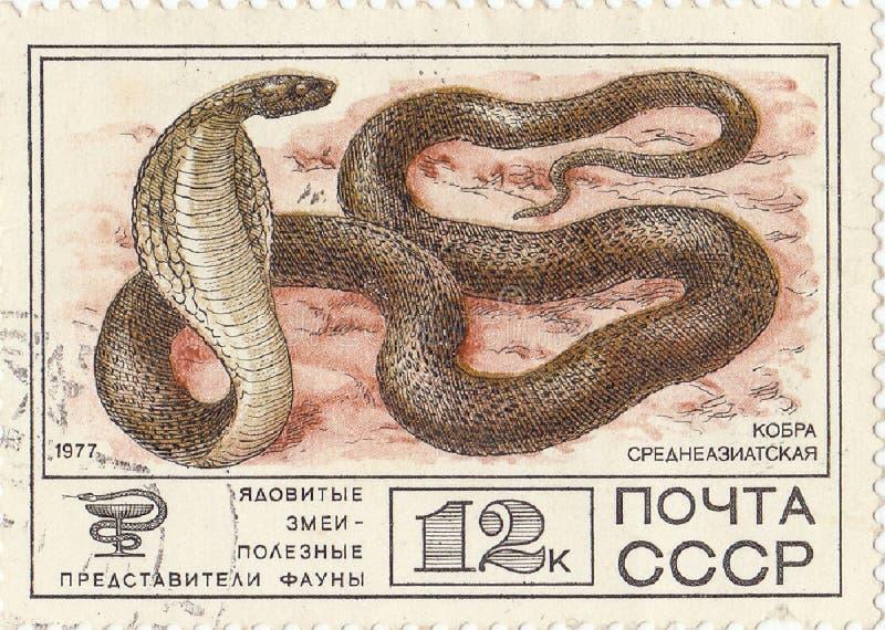 Central asiatisk kobra royaltyfri fotografi