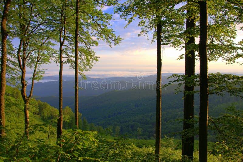 Central Balkan Mountain, Old mountain, Bulgaria royalty free stock images