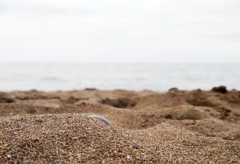 central java beach stock image