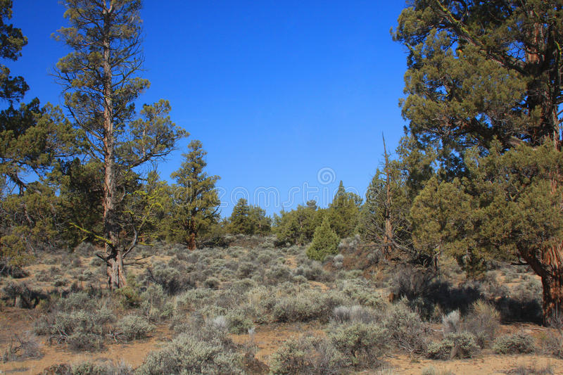 Central Oregon High Desert royalty free stock image