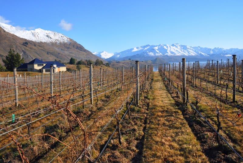Download Central Otago Vineyard, New Zealand Stock Photos - Image: 20912523