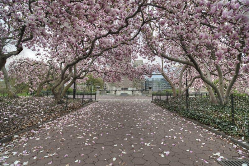 Central Park, весна Нью-Йорка стоковое фото rf