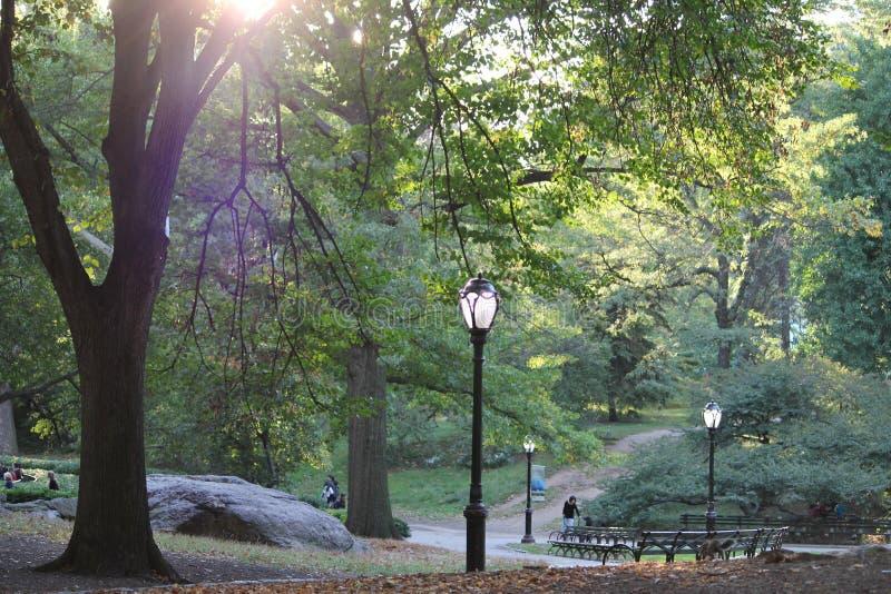 central park zdjęcia stock