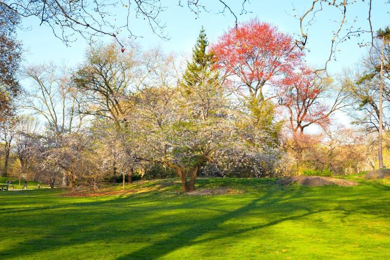Central Park alla molla in anticipo immagine stock