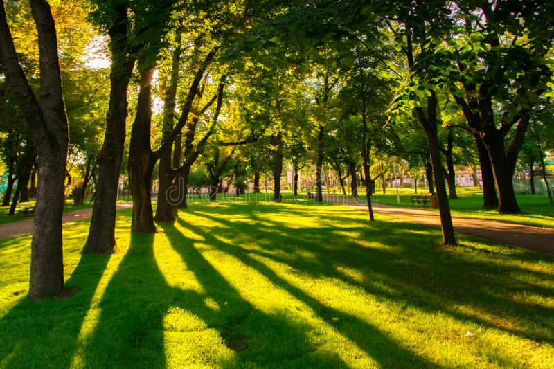 Central Park Anton von Scudier from Timisoara at sunset. Trees, sunsets, parks, leaves, lights, summers, foliages, sunlights, grasses, natures, beautifuls stock photography