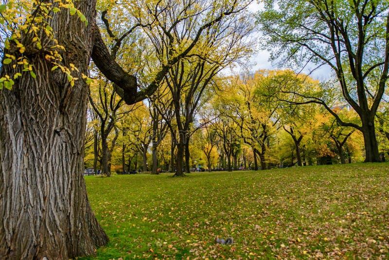 Central Park Autumn in midtown Manhattan New York City royalty free stock photo