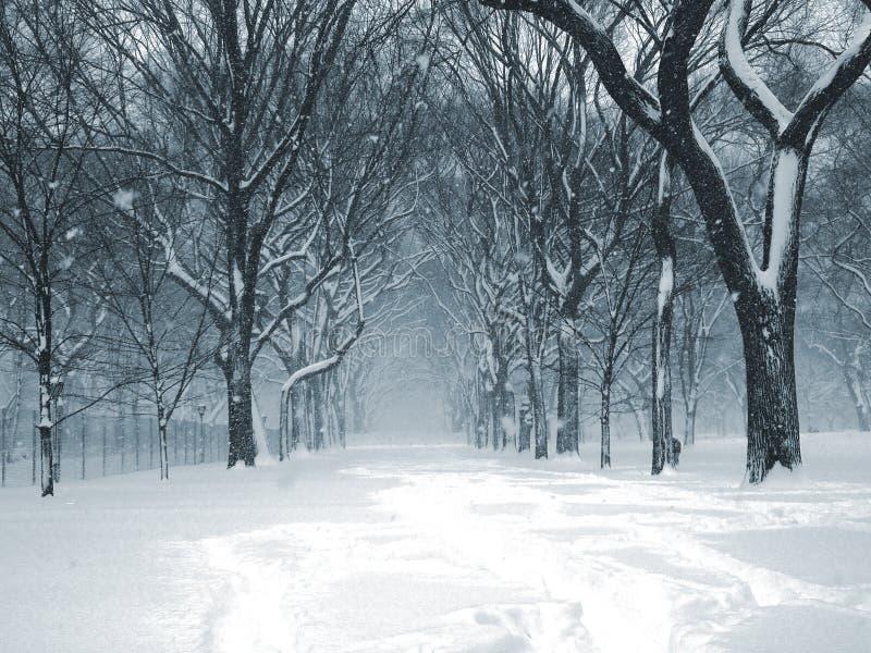 Central Park Blizzard 04 stock photo