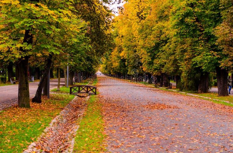 Central Park Cluj Napoca, Трансильвании, Румынии стоковые изображения rf