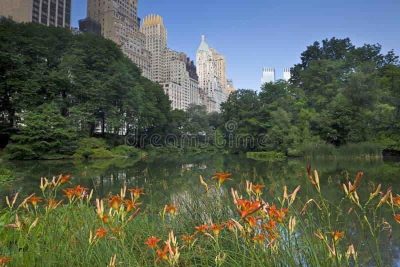 Central Park, daglelies voor vijver royalty-vrije stock foto's