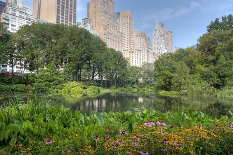 Central Park damm royaltyfri bild