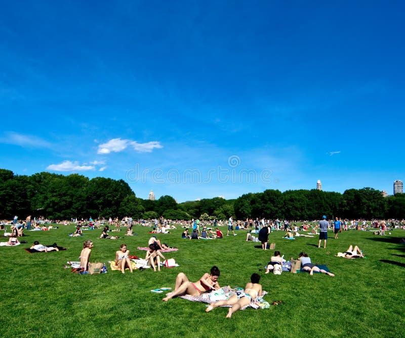 Central Park (de Weide van Schapen) in New York stock foto's
