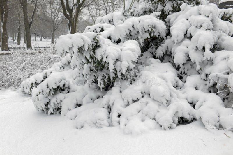 Central Park durante el centro de la nevada con la nieve que cae en New York City imagen de archivo