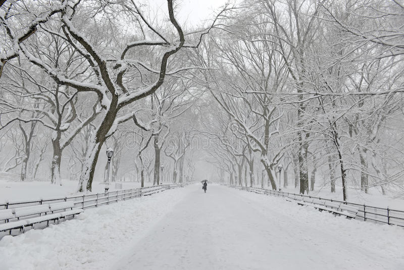 Central Park en la nieve después de la nevada, New York City fotografía de archivo