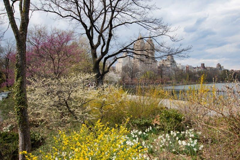 Central Park fjäder royaltyfria foton