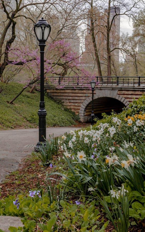 Central Park g?r royaltyfri bild