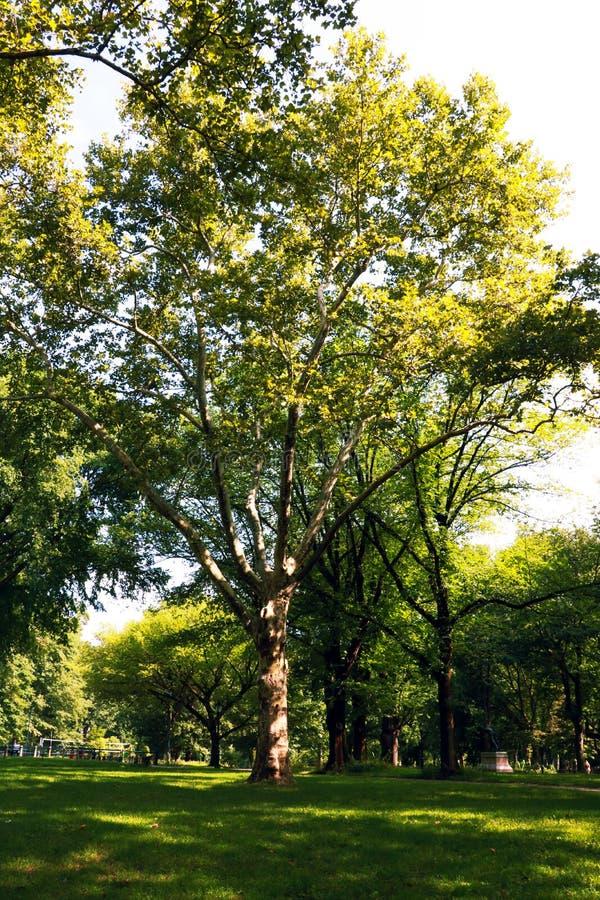Central Park Imagem da área da alameda em Central Park, New York City, EUA foto de stock royalty free