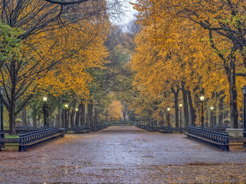 Central Park Mall in autumn. Central Park Mall walkway through the middle in autumn royalty free stock photo