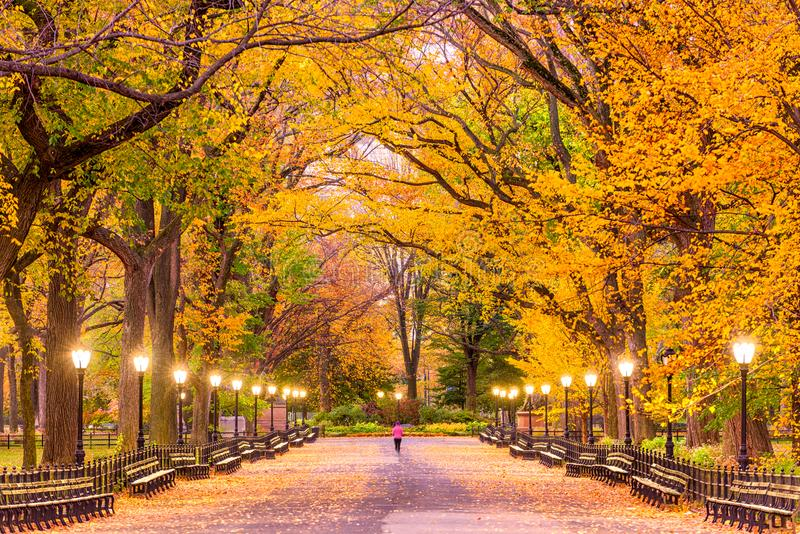 Central Park Autumn. Central Park at The Mall in New York City during autumn royalty free stock images