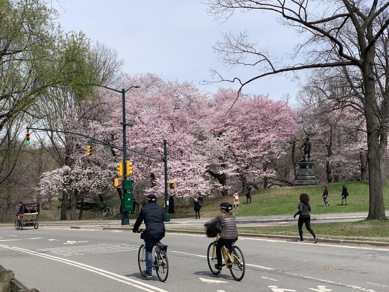 Central Park na primavera, New York City, EUA fotos de stock